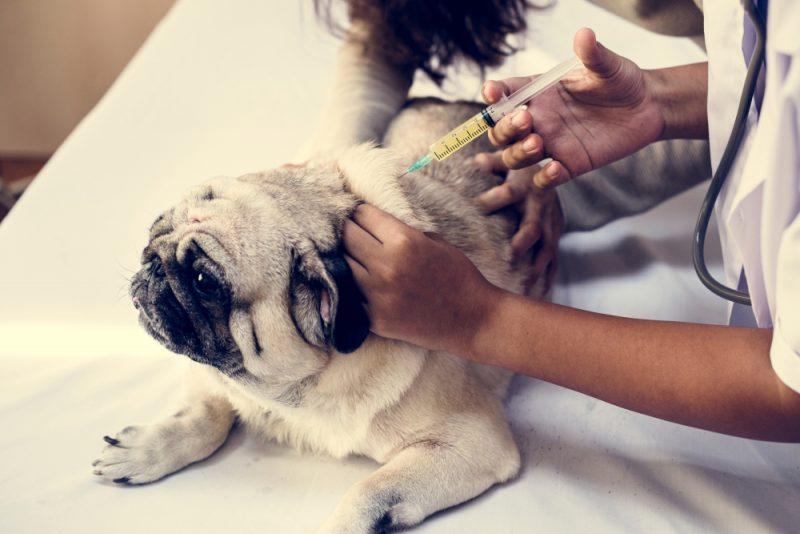 חיסון לכלב