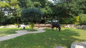 הפנינג סוסים וכלבים בתל מונד