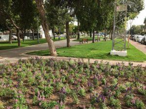 גן התותחנים. מדשאות רחבות וצמחיה