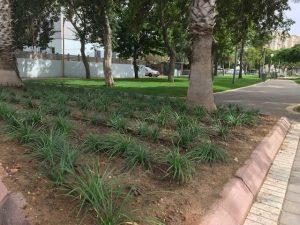 גן התותחנים. צמחיה חדשה