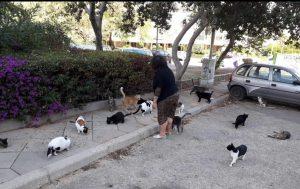 חתולים בחולון