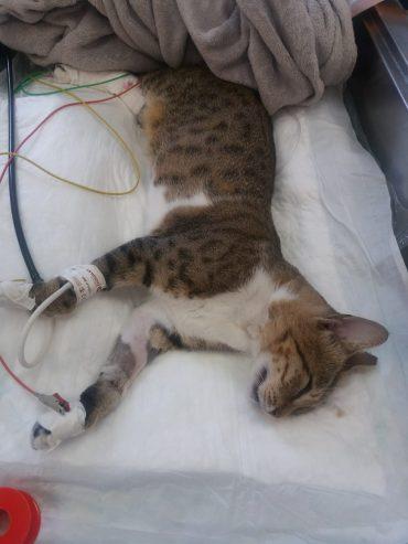 חתול שהורעל ברחוב השיטה ונזקק לטיפול רפואי