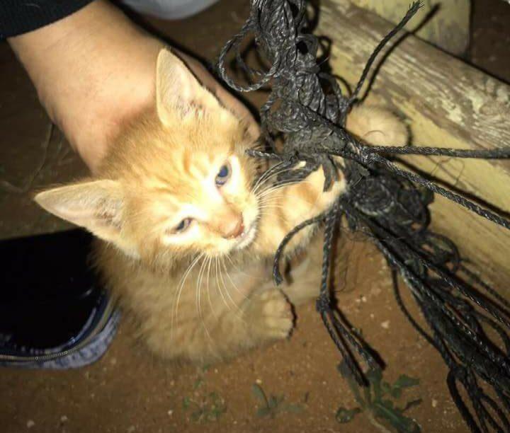 חתול קשור בחוטים. צילום: פרטי
