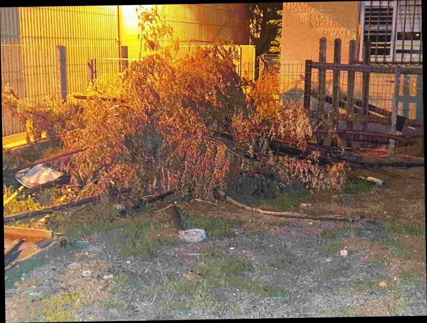 מבצע של עיריית חולון לאיתור מפגעים בחצרות פרטיות שמשפיעים על המרחב הציבורי. צילום-עיריית חולון (9)