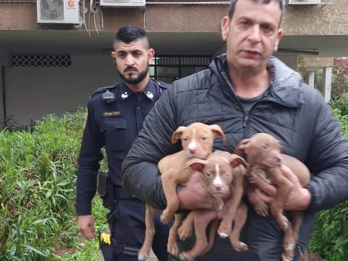 גורי כלבים שהוחזקו ללא כחוק במקלט בחולון