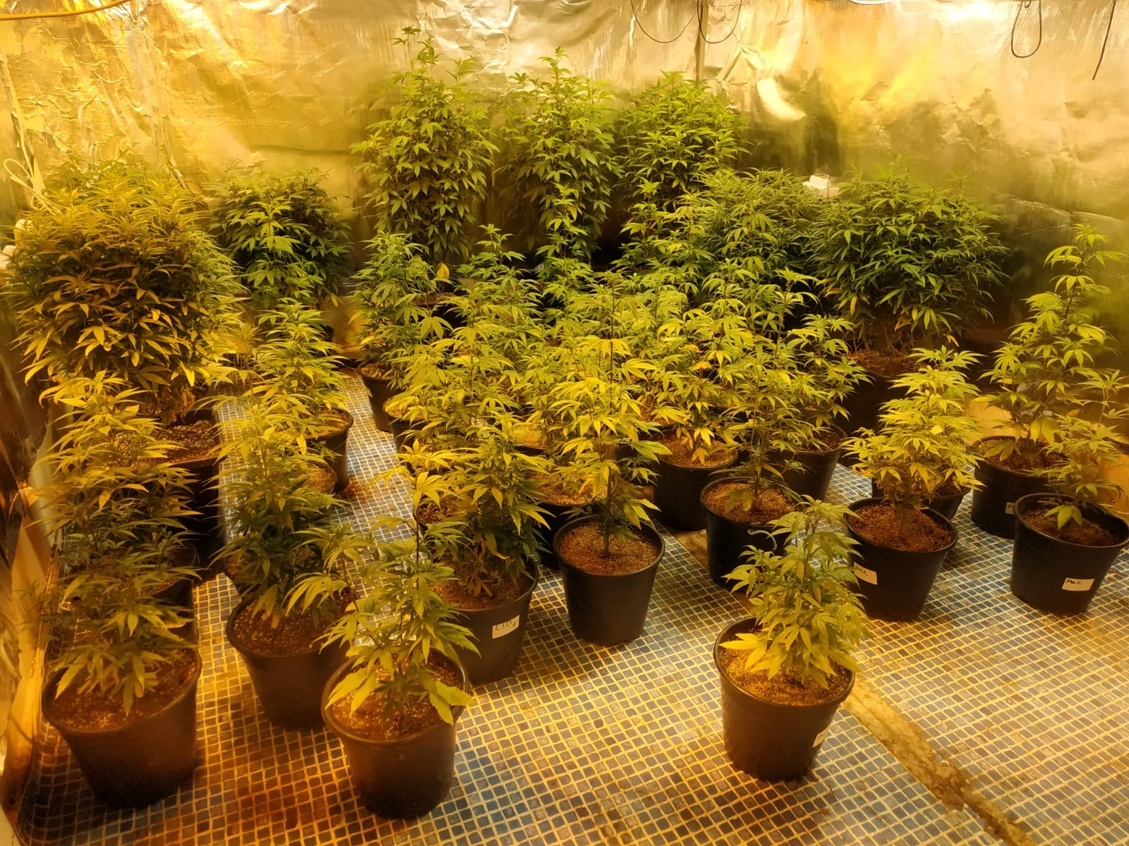 מעבדה לגידול סמים. צילום: דוברות המשטרה